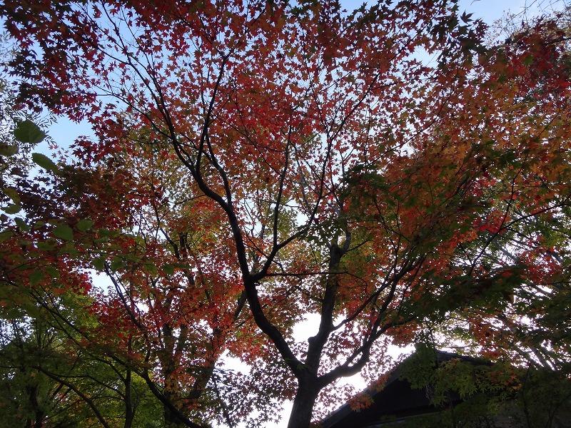 ゆふいん温泉山荘わらび野中庭の景色01