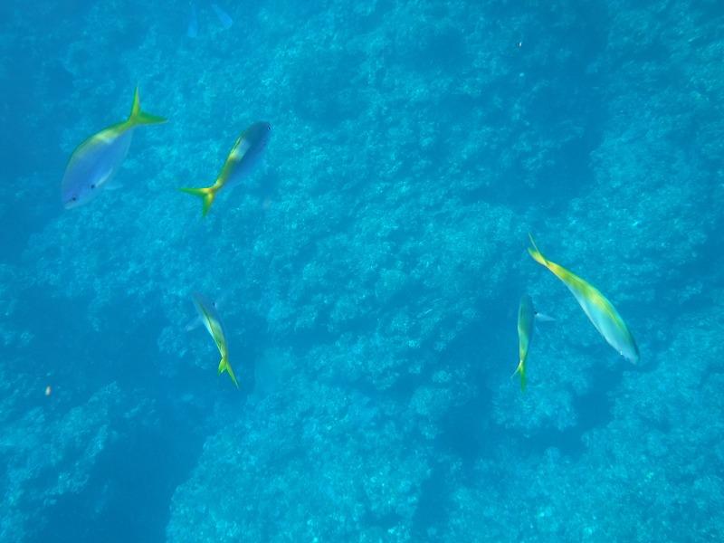 石垣島マンタシュノーケルおすすめショップ|ソライロ・マリンでマンタに遭遇4