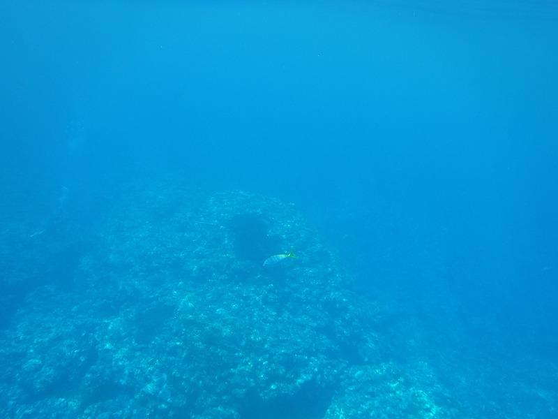 石垣島マンタシュノーケルおすすめショップ|ソライロ・マリンでマンタに遭遇7