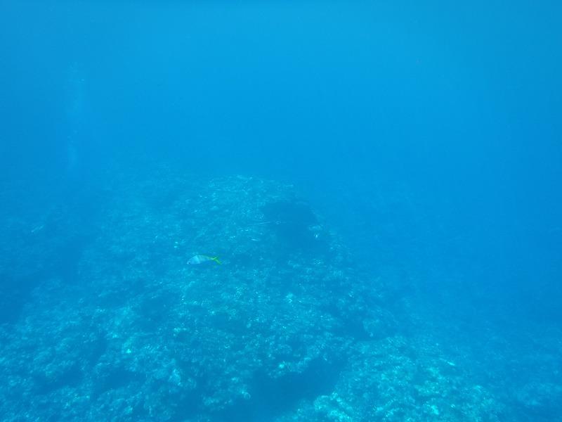 石垣島マンタシュノーケルおすすめショップ|ソライロ・マリンでマンタに遭遇8
