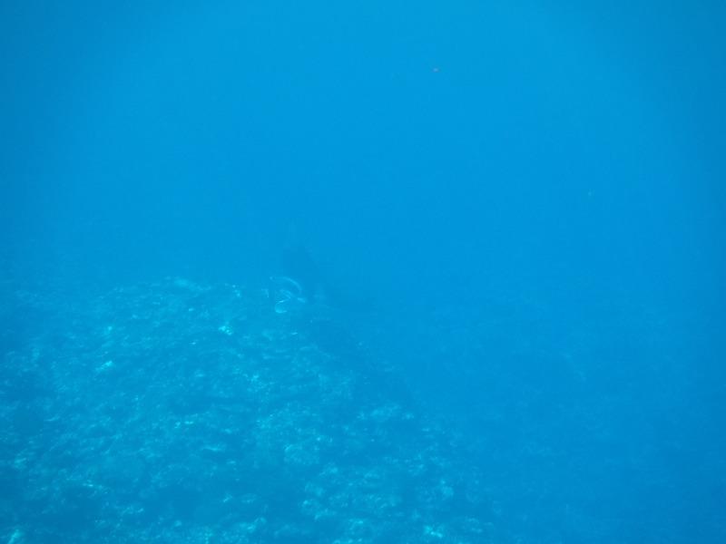 石垣島マンタシュノーケルおすすめショップ|ソライロ・マリンでマンタに遭遇9