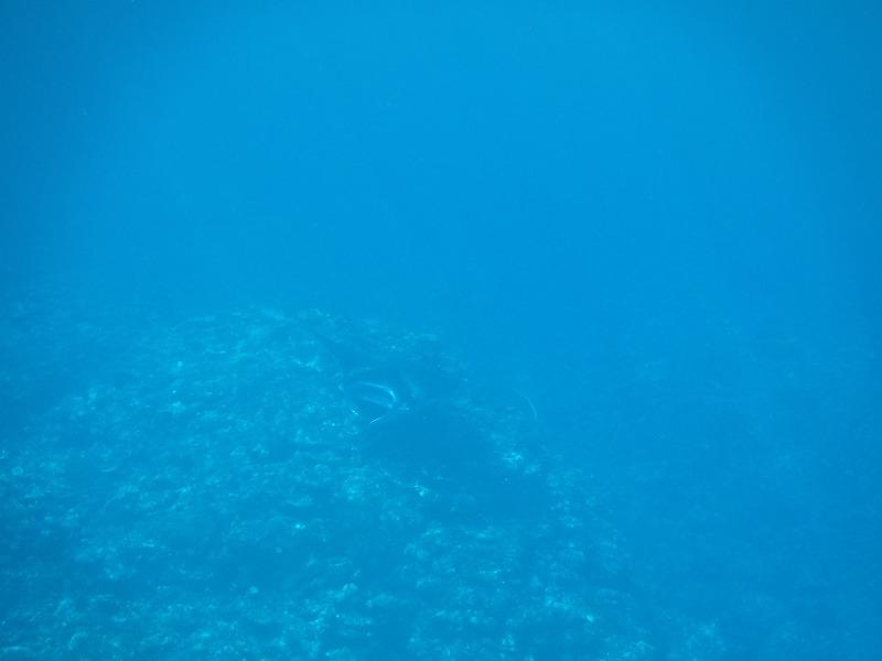 石垣島マンタシュノーケルおすすめショップ|ソライロ・マリンでマンタに遭遇10