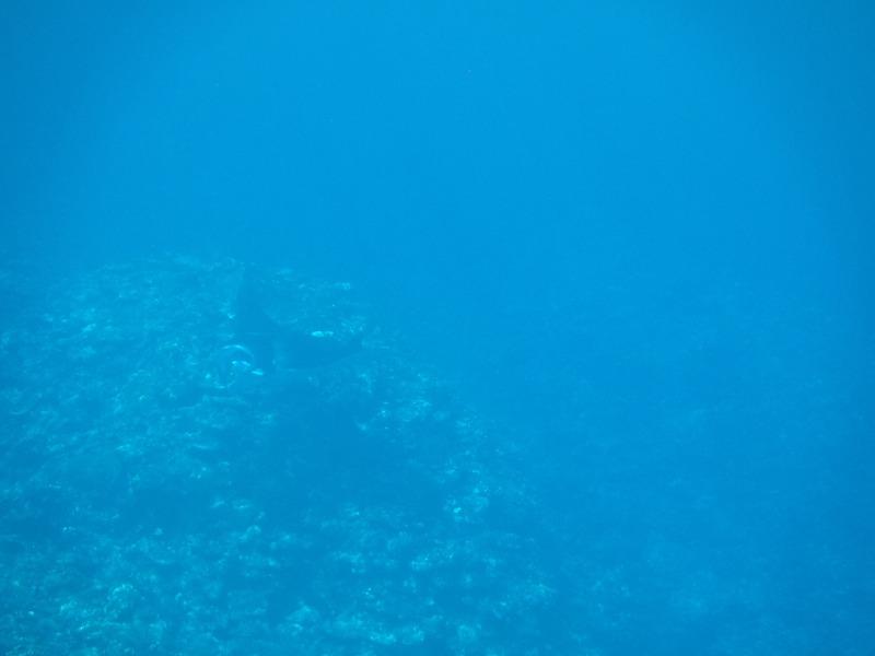 石垣島マンタシュノーケルおすすめショップ|ソライロ・マリンでマンタに遭遇11