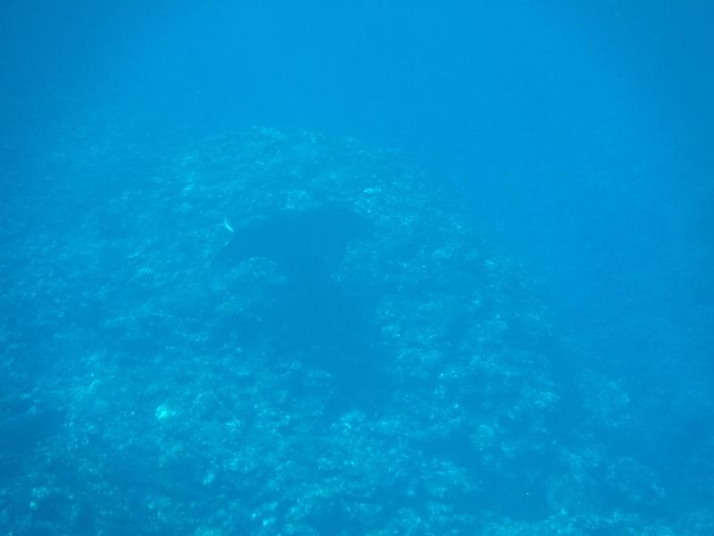 石垣島マンタシュノーケルおすすめショップ|ソライロ・マリンでマンタに遭遇12
