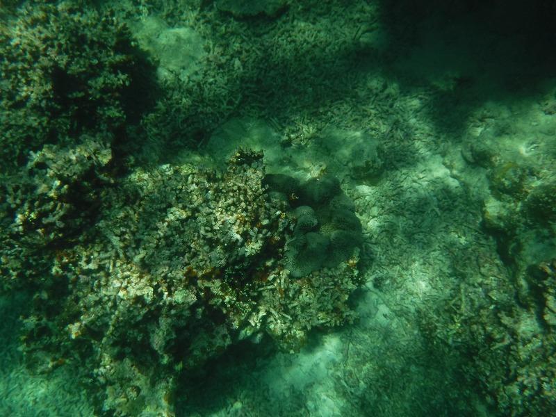 石垣島マンタシュノーケルおすすめショップ|ソライロ・マリンでサンゴ礁シュノーケリングツアー1