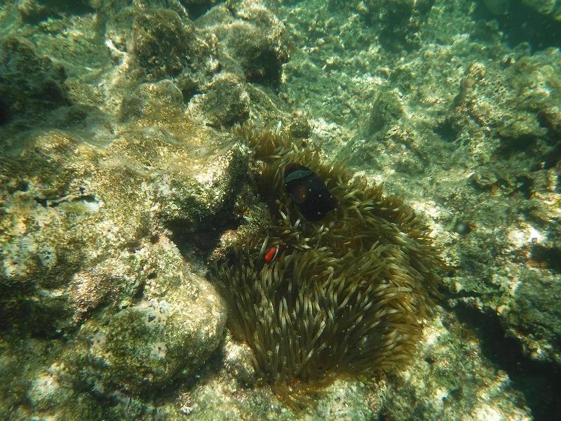 石垣島マンタシュノーケルおすすめショップ|ソライロ・マリンでサンゴ礁シュノーケリングツアー5