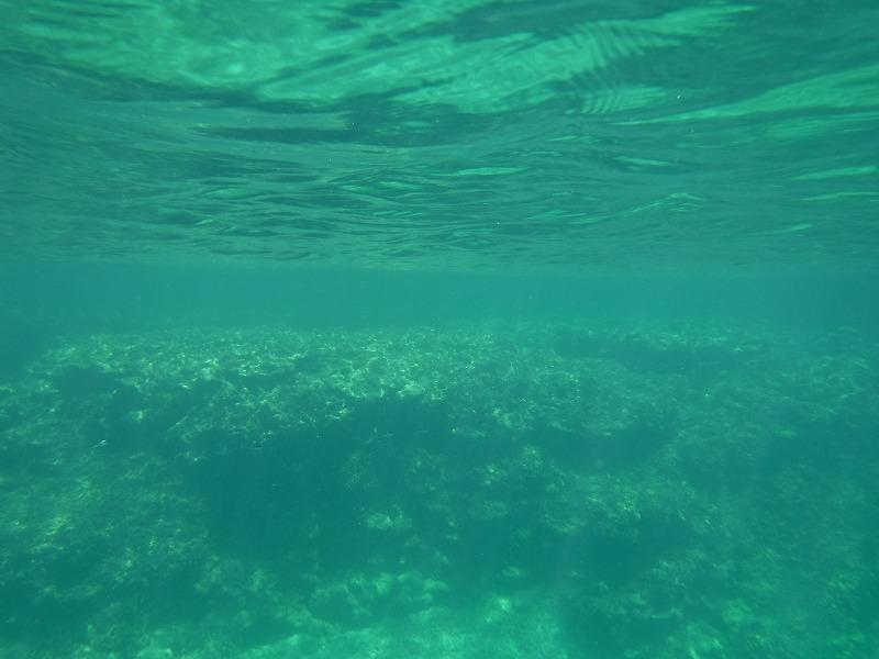 石垣島マンタシュノーケルおすすめショップ|ソライロ・マリンでサンゴ礁シュノーケリングツアー2