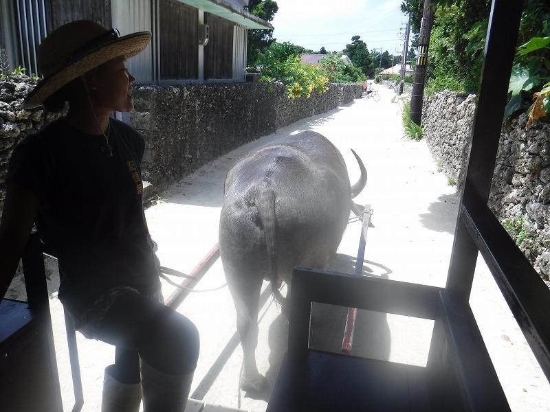 竹富島で牛車に乗車3