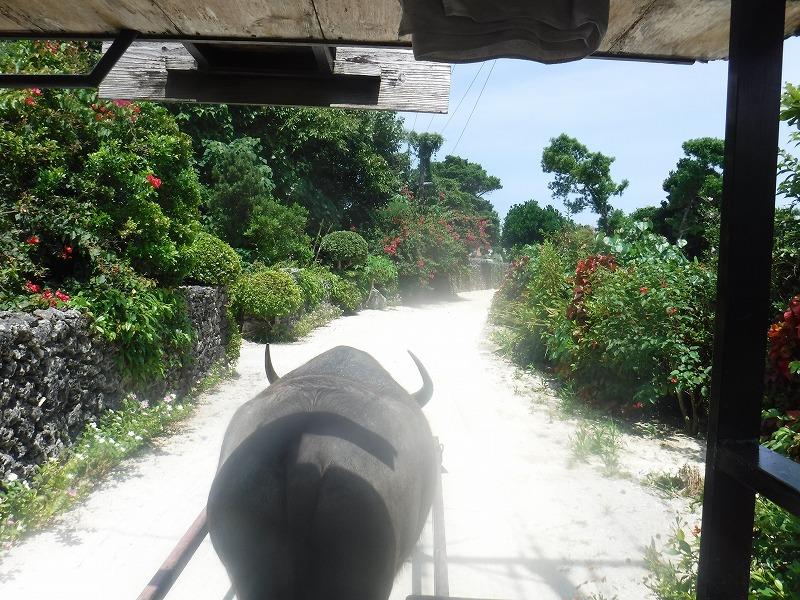 竹富島で牛車に乗車4