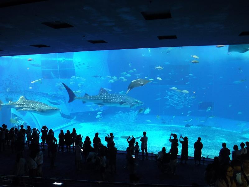 沖縄美ら海水族館観光5