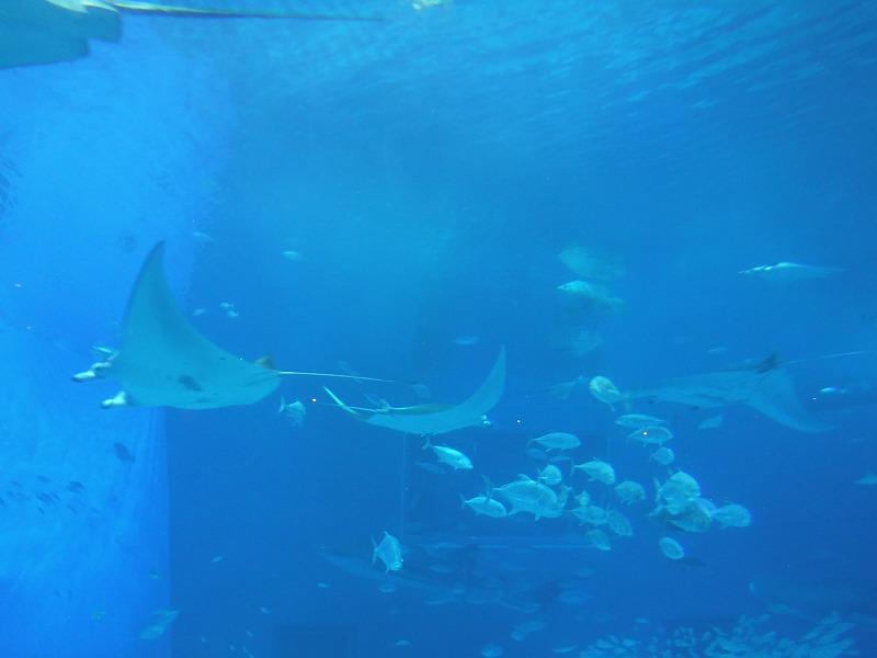 沖縄美ら海水族館観光6