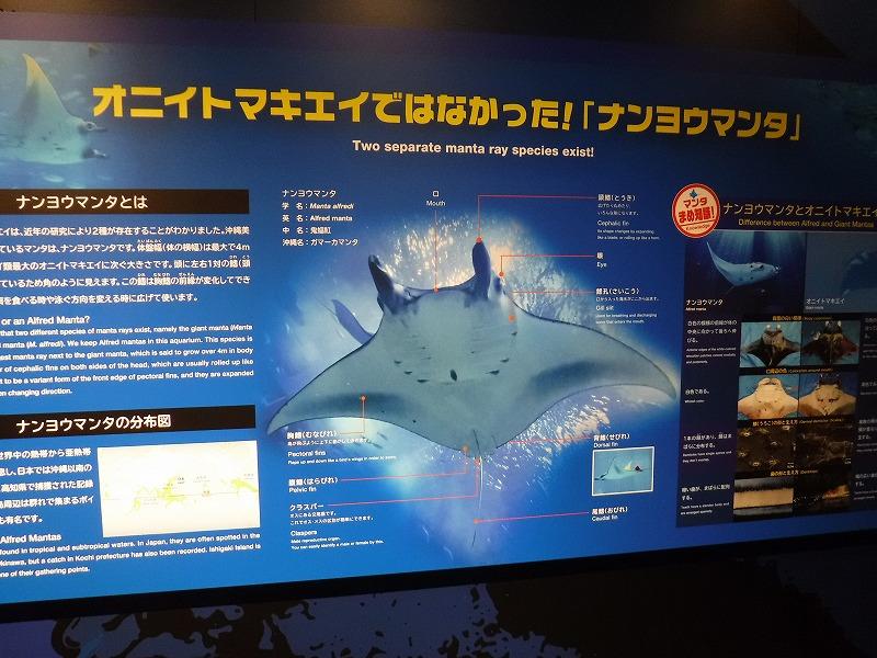 沖縄美ら海水族館観光8