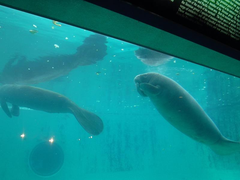 沖縄美ら海水族館観光9