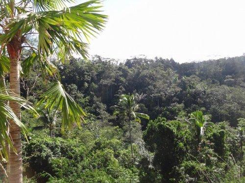 バリ島ウブドおすすめホテル|コマネカアットタンガユダから見えるジャングルの景色_2