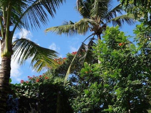 バリ島ウブドおすすめホテル|コマネカアットタンガユダから見えるジャングルの景色_4