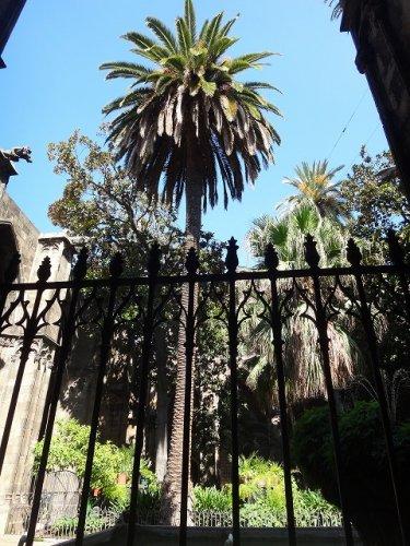 バルセロナカテドラル_窓からみた外観