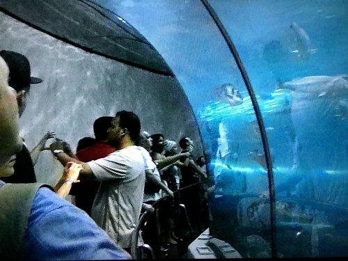 バルセロナ港近くの水族館_水中トンネル