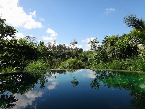 コマネカタンガユダ旅行記|ホテルのセンタープールから森を見る