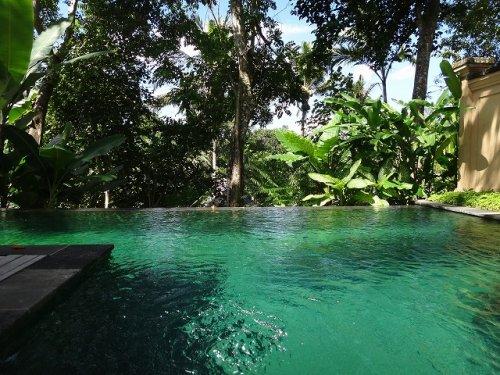 ウブドのプライベートプール付きヴィラ|コマネカアットタンガユダヴァレープールヴィラのプライベートプールは森に向かってインフィニティ