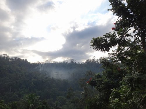 コマネカタンガユダ旅行記|ホテルから見た夜明けの森の風景