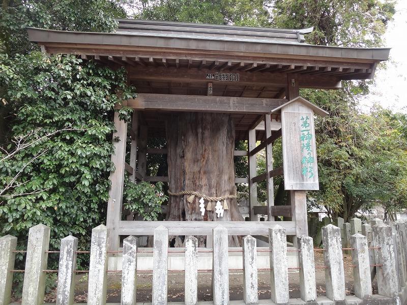 肥後一の宮 阿蘇神社_第一神稜の神杉