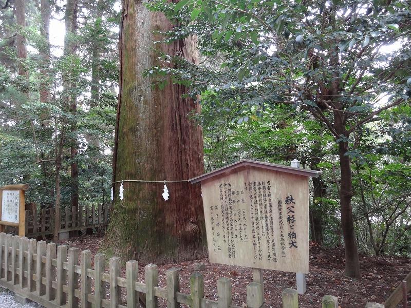 高千穂神社3パワースポット_秩父杉