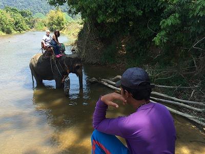 カオラックオプショナルツアー|AMエレファントトレッキング_川の水を飲む象