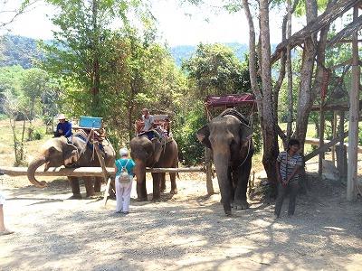 カオラックオプショナルツアー|AMエレファントトレッキング_象のキャンプ処