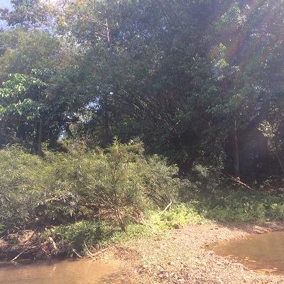 カオラックオプショナルツアー|PMバンブー筏川下り_風景3