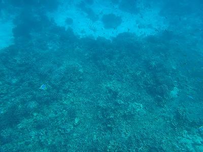 シミラン諸島ツアーアンダマン海シュノーケル_透明すぎる海中