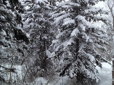 ラビスタ大雪山貸し切り風呂くぽの湯_露天風呂からの外の景色
