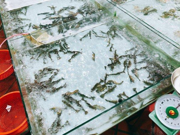 ベトナム・ダナンのローカルシーフードレストラン_タインヒエン2(Thanh Hien2)_生簀の魚