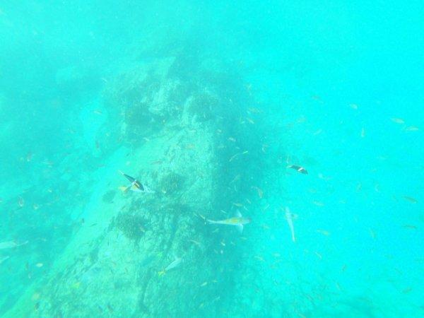 ワールドベンチャーズDreamTripsにセットされていたマリエタス諸島ツアーMARIESTA ECO-DISCOVERRY_上陸したビーチの海中