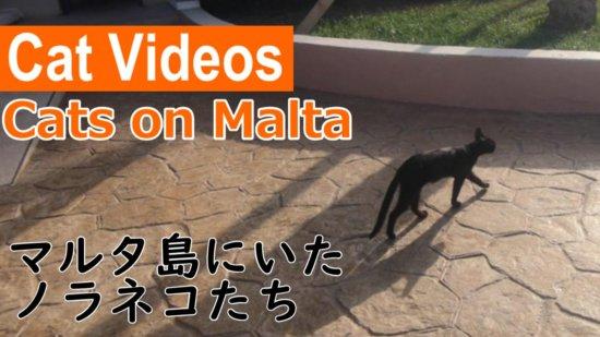 【vlog】マルタ島は猫いない、でも猫屋敷?を発見!ミステリーゾーン