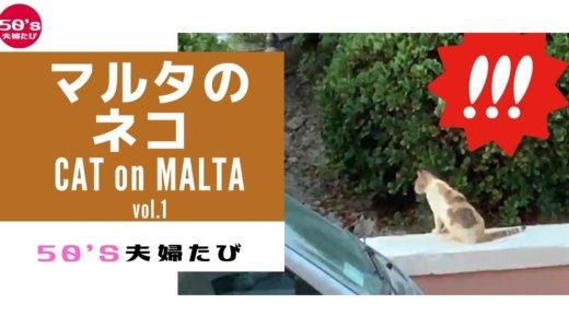 マルタの猫スポット4つvlog|ネコ屋敷?にサンジュリアンで導かれた件