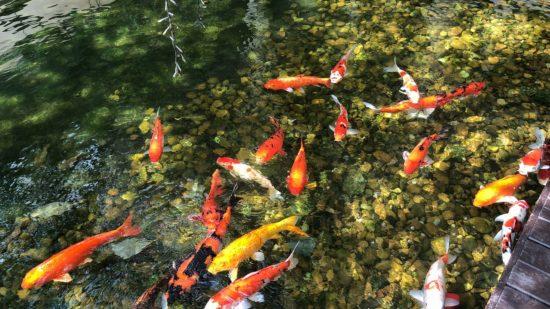 タイ_デュシタニホアヒン_庭池3